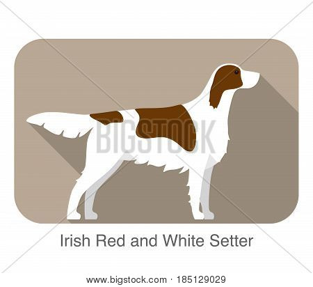 Irish Red And White Setter Terrier Standing And Watching