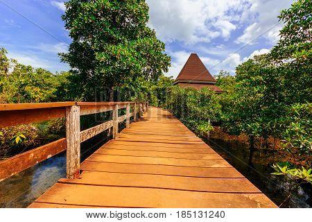 Pa Phru Tha Pom Khlong Song Nam at Kra-bi provinceThailand