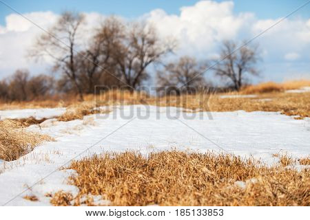 Dry grass under melting snow in early spring