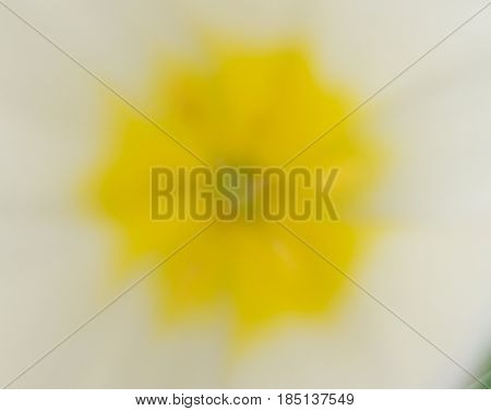The varicolored art Abstract picture.