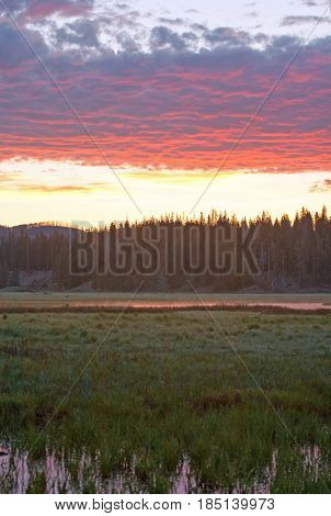 Sunrise Dawn over Pelican Creek sedges / grass in Yellowstone National Park in Wyoming USA