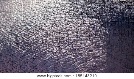 Rough hippo skin as background. Abstract texture