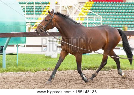 photo of horse riding on the racetrack