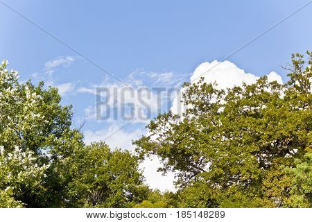 Summer blue sky with white cloud and green trees