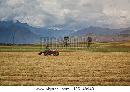 Agriculture tractor on yellow field. One red tractor cultivate field