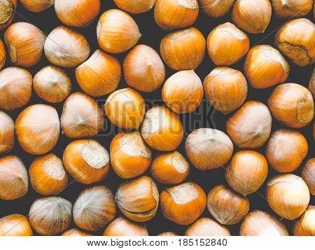 Hazelnut Fruit, Faded Vintage Look