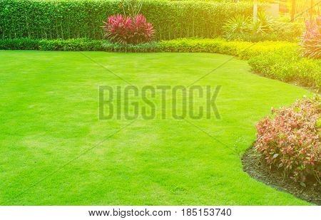 The morning sun shines on the green lawn, the lawn on the ground for a garden landscape design.