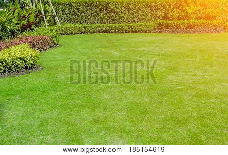 The morning sun shines on the green lawn, garden landscape design.