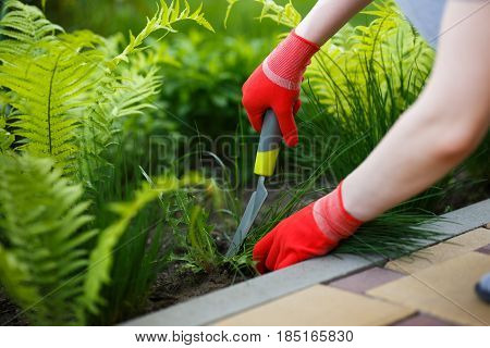 Photo of gloved woman hand holding weed and tool removing it from soil