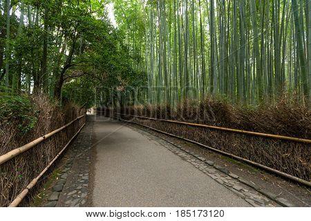 Bamboo forest in Arashiyama of Kyoto