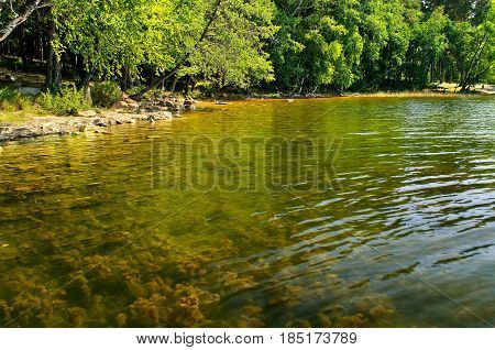 Summer water landscape. Summer view of Elovoe Lake-Spruce lake - in South Ural, Chelyabinsk region,Russia. Transparent summer waters with water plants -closeup of summer nature. Colorful natural summer background. Summer water nature