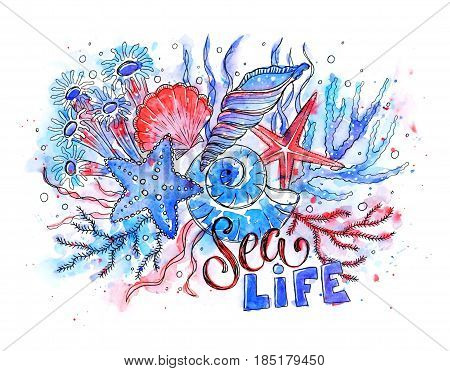 Sea life watercolor illustration. Hand drawn starfish, seashells and anemones composition on white background.