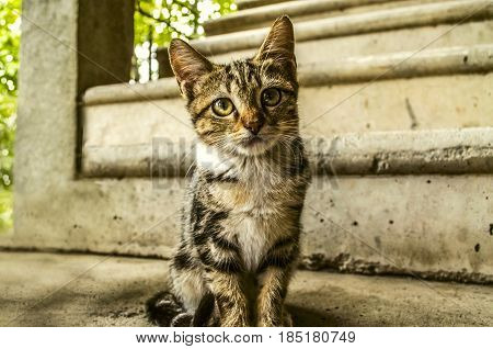 Redhead gray striped kitten sits in the courtyard on the concrete stairs