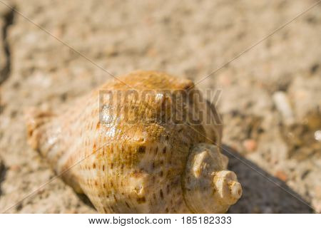 The shell of snails on the ground