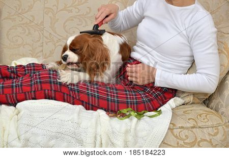 Woman Brushing Lovely Dog