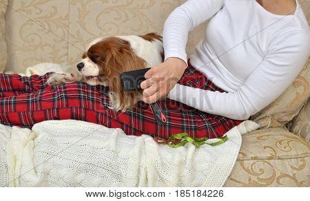 Brushing Lovely Dog