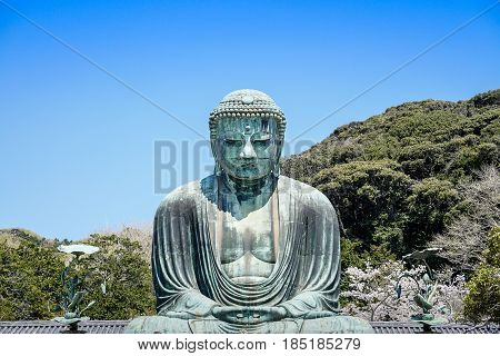 The great buddha Daibutsu of Kamakura with cherry blossom Japan