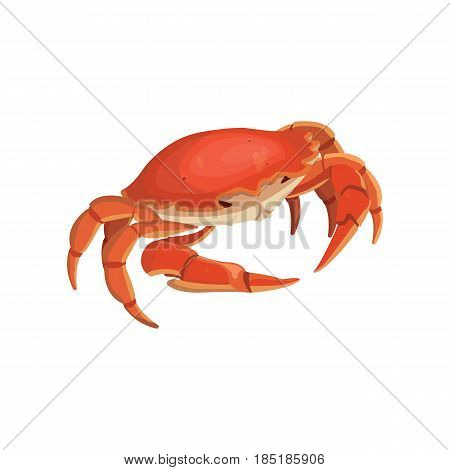 vector red crab, shellfish realistic illustration isolated
