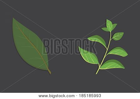 Aromatic herbs set. Fresh herbs and spices set. Vector isolated illustration.