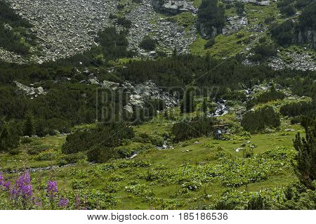Mountain top overgrown with coniferous forest, glade  and stream on the ecological walk toward   Maliovitza peak in Rila mountain, Bulgaria
