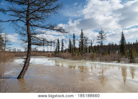 Spring in a small stream in South Yakutia Russia in good weather