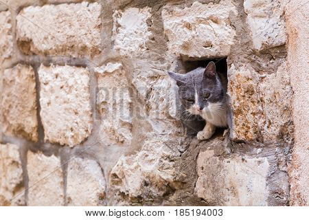 A cat peers out from a gap in the walls within the old town region of Dubrovnik.
