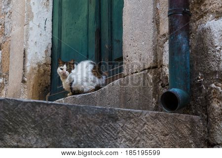 A domestic cat lies at the foot of a doorway in the Dubrovnik old town.