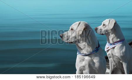 two pretty labrador retriever dogs sitting in front of the dark blue sea