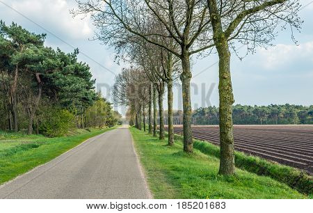 Country road in the Netherlands with forest on one side and a potato field with ridges with recently seeded potatoes on the other side. It sis a cloudy day in the spring season.