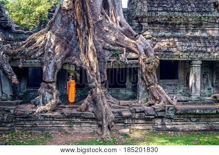 Trees growing out of Ta Prohm temple Angkor Wat in Cambodia.