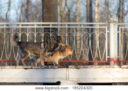Two stray dogs running on an empty platform