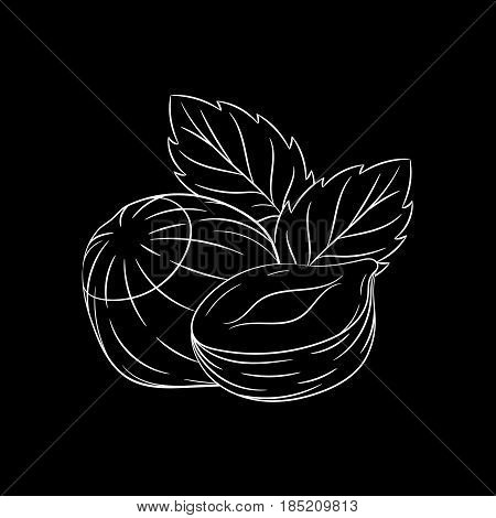 Hand drawn hazelnut sketch isolated on black background. Organic food. Vector engraved illustration