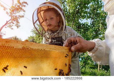 Experienced beekeeper grandfather teaches his grandson caring for bees. Apiculture. The transfer of experience