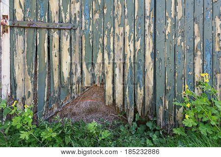 Green bladdered stable doors with rusty door fittings.