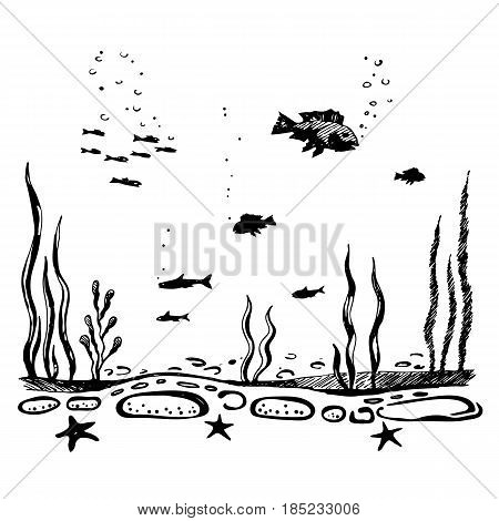 Sea bottom. The flora and fauna of the underwater world of the ocean. sketch vector.