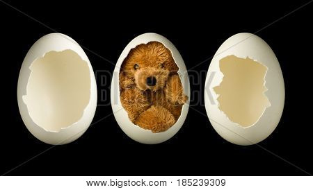Little teddy bear in an egg plus two empty open eggs, to photoshop a baby or object in it