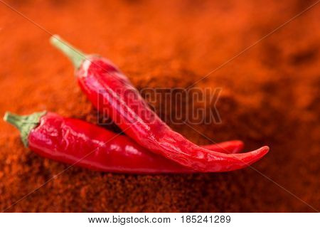 chili red hot pepper, concept of popular spice - closeup on two delicious juicy pods of red chili pepper isolated over the top of red curry powder, top view, flat lay, selective focus