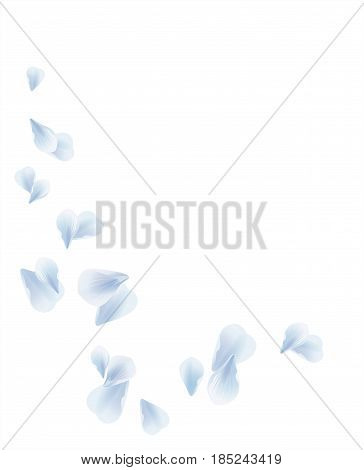 Petals Roses Flowers. White Blue Sakura flying petals isolated on white background. Vector EPS 10, cmyk