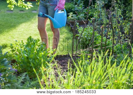 Vegetables and herbs garden, woman with watering can standing by lovage herb, sugar peas
