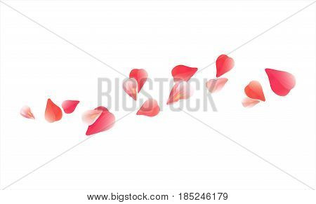 Petals design. Flower background. Petals Roses Flowers. Pink Red Sakura flying petals isolated on white background. Vector EPS 10, cmyk