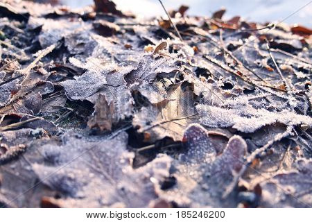 Frozen leaves lying on the beachside a beautiful winters day