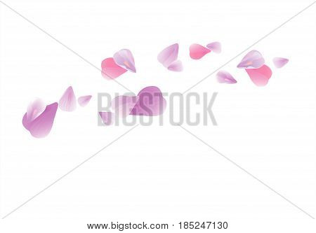 Vector_bg_purple_petals Falling Isolated On White_309.eps