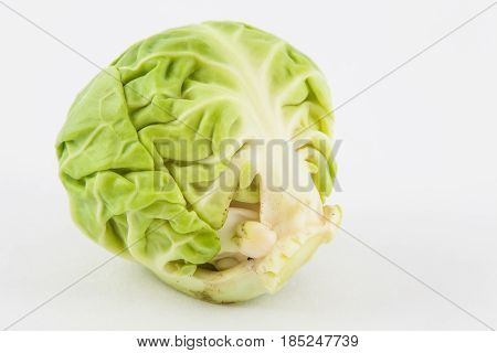 Brussels sprout (Brassica oleracea var. gemmifera) isolated in white background