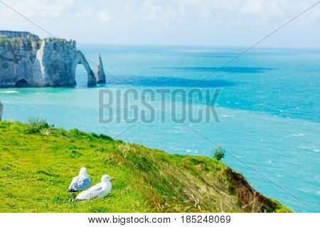 Seagulls On Cliffs And Sea Background