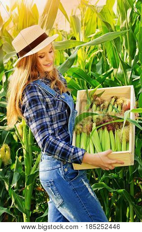 Time To Crop Corn. Portrait Of Young And Attractive Girl In Hat And Coveralls Holding Box With Corn