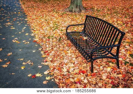 Empty bench surrounded by colorful autumn leaves at a park