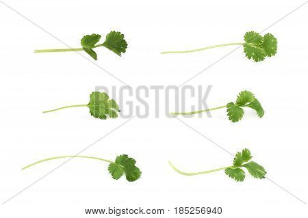 Single fresh coriander leaf isolated over the white background, set of six different foreshortenings