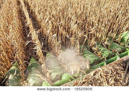 closeup of combine harvesting corn