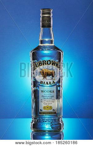 Zubrowka white vodka on blue gradient background. Bison vodka is Polish brand. It is produced in Polmos Bialystok.