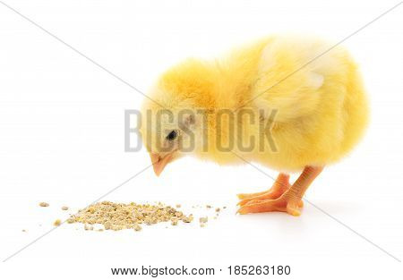 chicken with food on a white background.